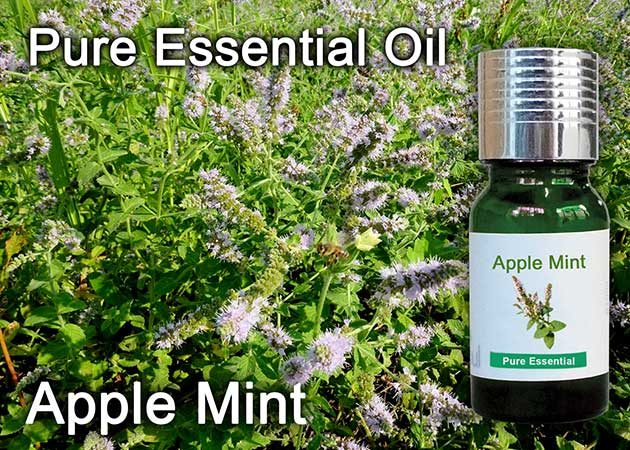 apple mint essential oil