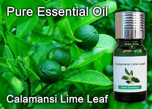 calamansi lime leaf essential oil