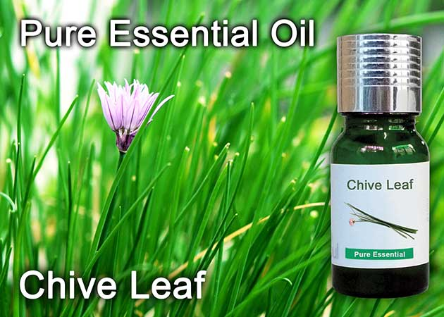 chive leaf essential oil