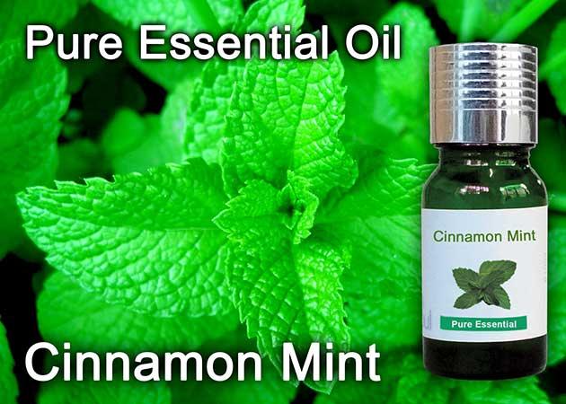 cinnamon mint essential oil