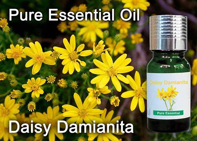daisy damianita essential oil