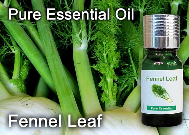 fennel leaf essential oil