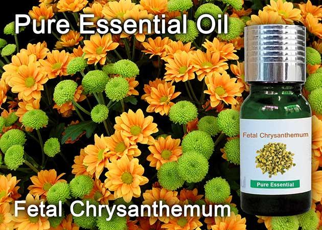 fetal chrysanthemum essential oil