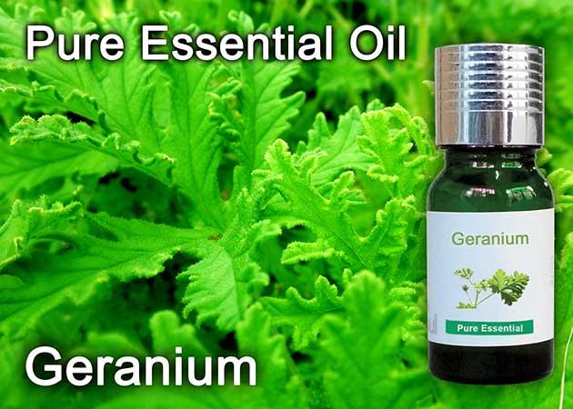 lemon geranium essential oil