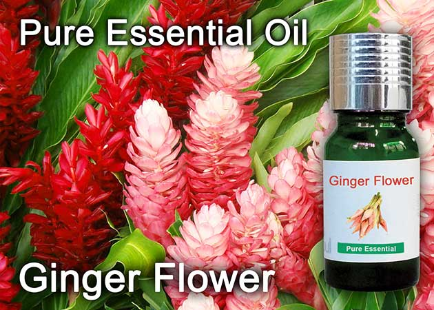 ginger flower essential oil