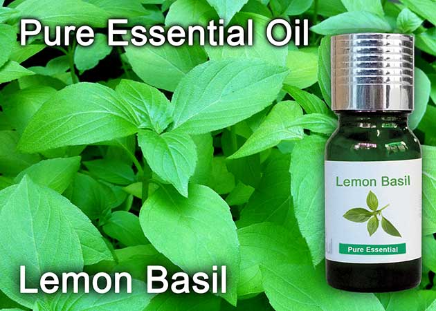 lemon basil essential oil
