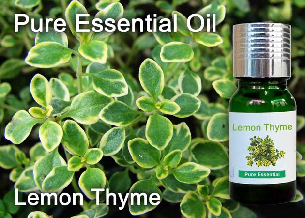 lemon thyme essential oil
