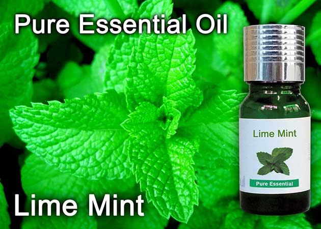 lime mint essential oil