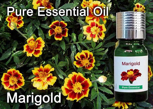marigold flower essential oil