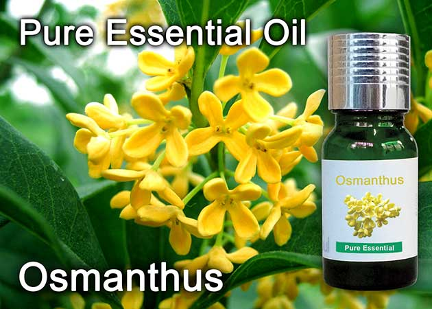 osmanthus flower essential oil