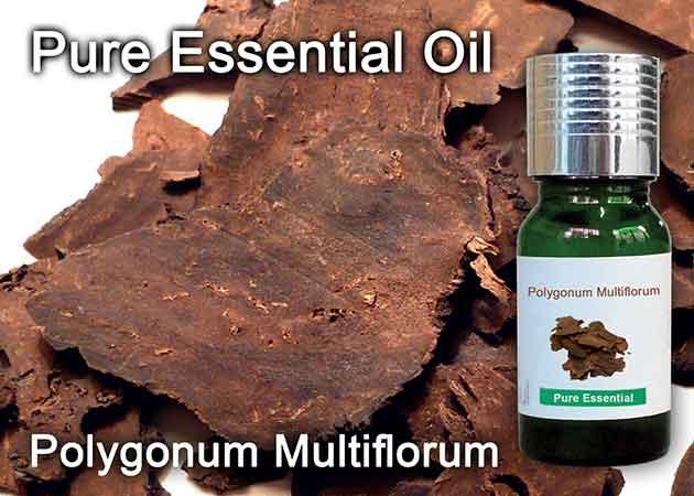 polygonum multiflorum essential oil