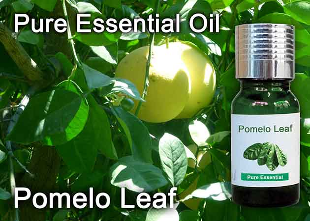 pomelo leaf essential oil