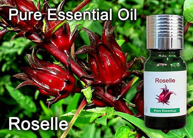 roselle flower essential oil