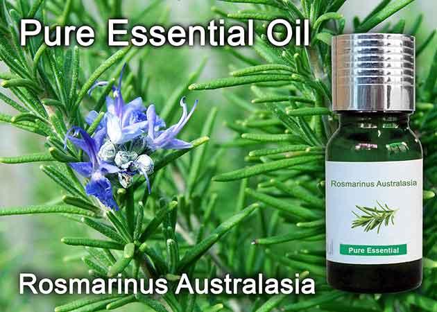 rosmarinus australasia essential oil