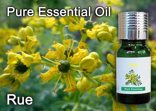 rue essential oil