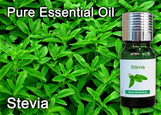 stevia essential oil