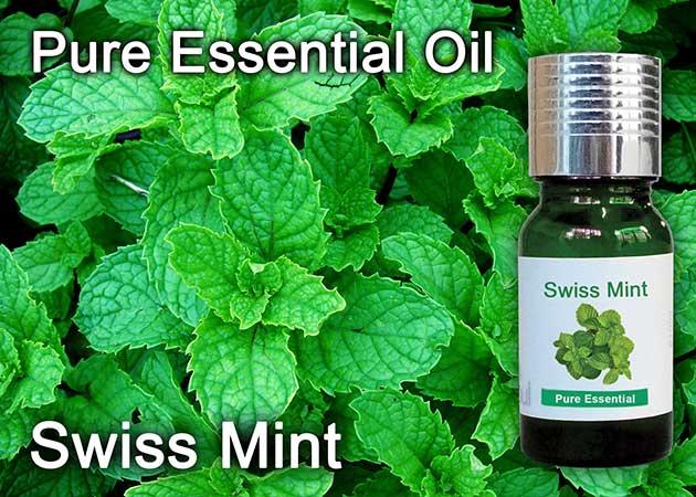 swiss mint essential oil