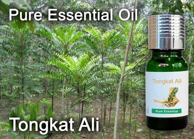 tongkat ali essential oil